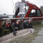 The Fraser Rivers Edge Bed & Breakfast Lodge BC fishing lodge image14