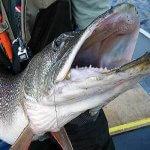 Cobham River Lodge Manitoba fishing lodge image5