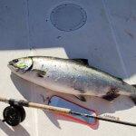 Port Eliza Lodge BC fishing lodge image2