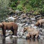 Anglers Lodge Alaska fishing lodge image61