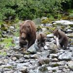 Anglers Lodge Alaska fishing lodge image25
