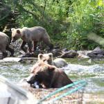 Anglers Lodge Alaska fishing lodge image23