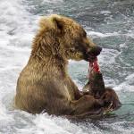 Angler's Alibi Alaska fishing lodge image11