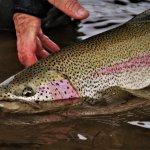 Alaska Rainbow Adventures Alaska fishing lodge image31