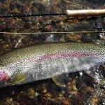 Alaska Rainbow Adventures Alaska fishing lodge image32