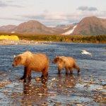 Alaska Rainbow Adventures Alaska fishing lodge image42