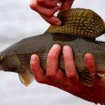 Alaska Rainbow Adventures Alaska fishing lodge image43