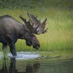 Arctic Lodges Saskatchewan fishing lodge image27