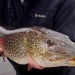 Arctic Lodges Saskatchewan fishing lodge image20