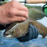 Arctic Lodges Saskatchewan fishing lodge image6