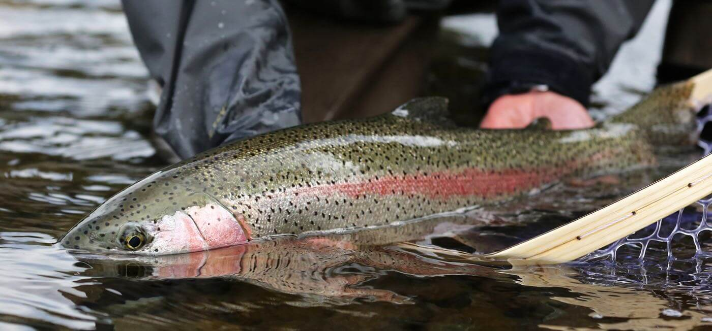 Freshwater fishing trips in BC Canada