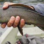 Bearclaw Lodge Alaska fishing lodge image35