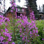 Bearclaw Lodge Alaska fishing lodge image13