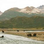 Becharof Rapids Camp Alaska fishing lodge image15