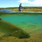 Becharof Rapids Camp Alaska fishing lodge image1