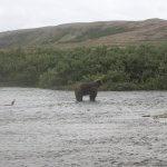 Bent Prop Lodge Alaska fishing lodge image9