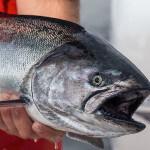 Blackfish Lodge BC fishing lodge image3