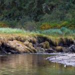 Blackfish Lodge BC fishing lodge image13