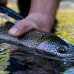 Blackfish Lodge BC fishing lodge image12