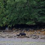 Blackfish Lodge BC fishing lodge image24