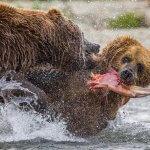 Bristol Bay Sportfishing Alaska fishing lodge image13