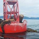 Calder Mountain Lodge Alaska fishing lodge image11