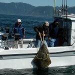 Cartwright Sound Charters BC fishing lodge image3