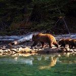 Chaunigan Lake Lodge BC fishing lodge image17