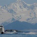 Elfin Cove Resort Alaska fishing lodge image10