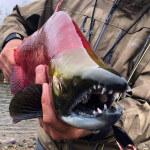 FishHound Expeditions Alaska fishing lodge image6