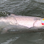 Nushagak River Adventures Lodge Alaska fishing lodge image5