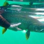 Aylmer Lake Lodge Northwest Territories fishing lodge image38