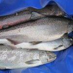 Jake's Nushagak Salmon Camp Alaska fishing lodge image28