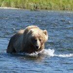 Kodiak Wilderness Adventures Alaska fishing lodge image33