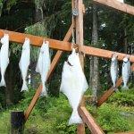 Majestic Eagle Lodge Alaska fishing lodge image7