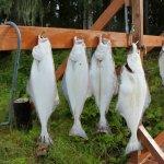 Majestic Eagle Lodge Alaska fishing lodge image5