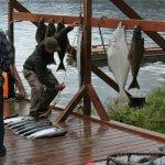 Majestic Eagle Lodge Alaska fishing lodge image4
