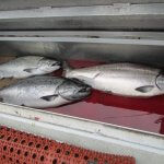 Naukati Bay Adventures Alaska fishing lodge image33