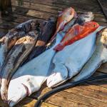 Nootka Island Lodge BC fishing lodge image3