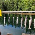 Nootka Cabins BC fishing lodge image17