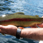 Northern Lights Lodge BC fishing lodge image8