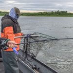 Nushagak King Salmon Safari Alaska fishing lodge image10