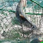 Nushagak King Salmon Safari Alaska fishing lodge image8