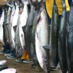 Pacific Gateway Wilderness Lodge BC fishing lodge image3