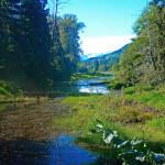 Deep Creek Lodge BC fishing lodge image13