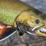 Rainbow King Lodge Alaska fishing lodge image56