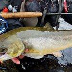 Rainbow King Lodge Alaska fishing lodge image55