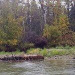 Rainbow King Lodge Alaska fishing lodge image40