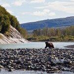 Rainbow King Lodge Alaska fishing lodge image35