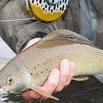 Rainbow King Lodge Alaska fishing lodge image29